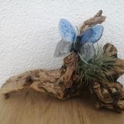 Klantfoto as in blauw grijze glazen vlinder