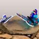 Vlinderrots gedenkobject kleurrijke vlinders op steen