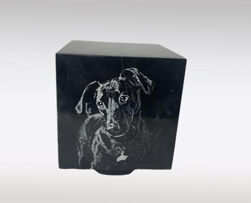 Cubos dierenurn portret hond